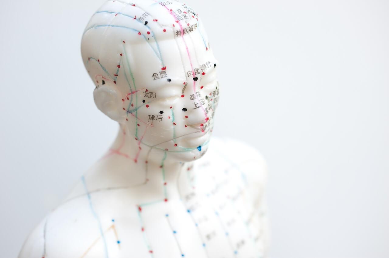 un mannequin pour apprendre l'acupuncture